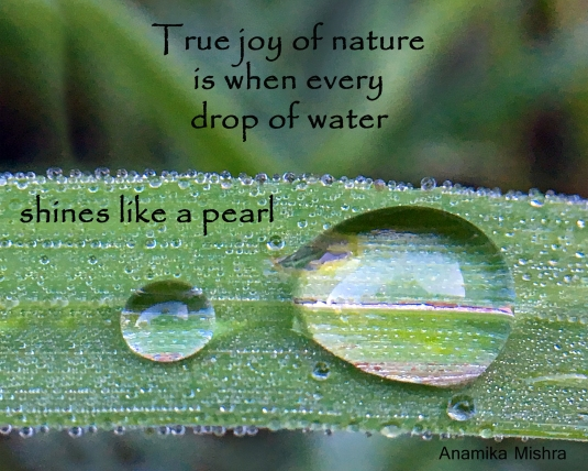 Nature quote about a drop of water.