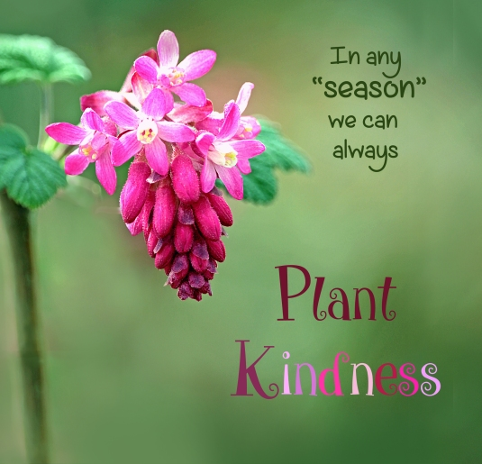 "In any ""season"" we can always plant kindness."