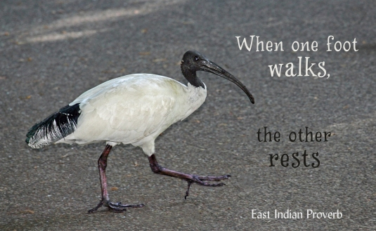 East Indian Proverb