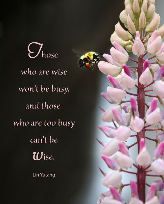 An inspirational quote about wisdom and being too busy.