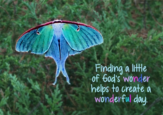An inspirational quote: Finding a little of God's wonder helps to create a wonderful day.