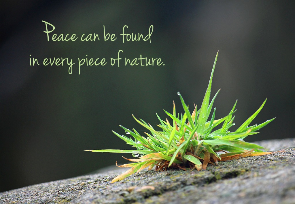 Nature quote:  Peace can be found in every piece of nature.