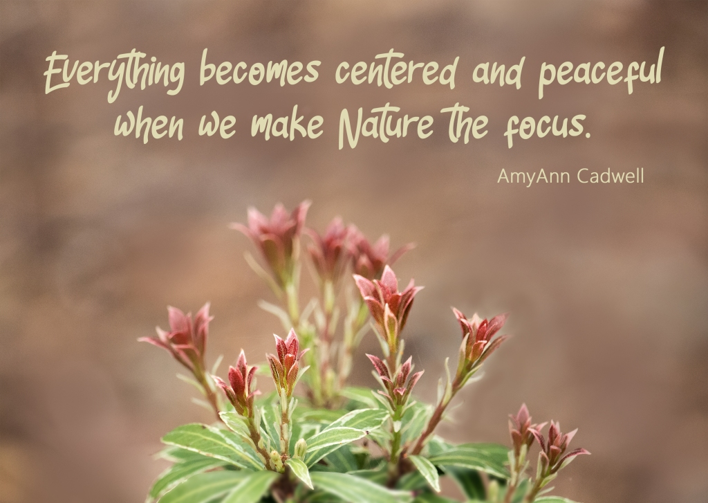 Nature quote by AmyAnn Cadwell about focusing on nature.